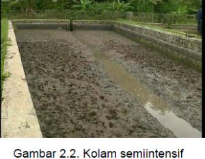kolam semiintensif